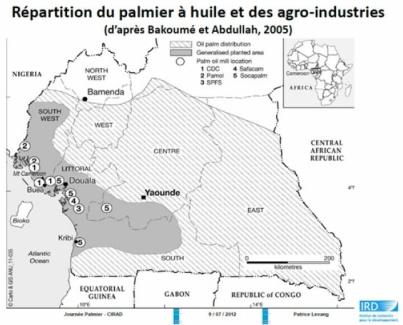 Historique du palmier à huile au Cameroun